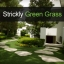 Strickly Green Grass