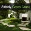 Strickly Green Grass